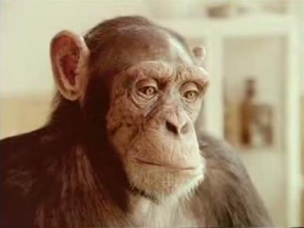 20061215083040-chimp-marato2.jpg