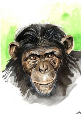 Cursos Etología de Primates en Fundación MONA