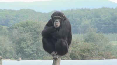 Alumnes de Psicologia de la UdG treballen amb simis a Fundació Mona